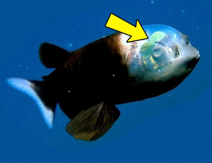 16Creatures That Have Abilities People Can Only Dream Of