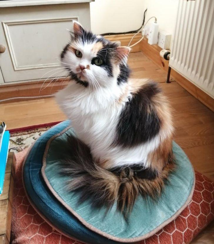 25 kotów pokazujących słodką stronę, którą ich właściciele widzą każdego dnia