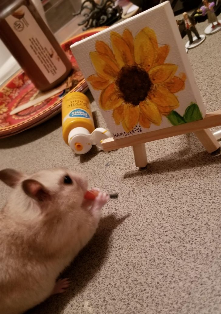 20 People Shared Pics of Their Talented Pets That Hollywood Is Crying For