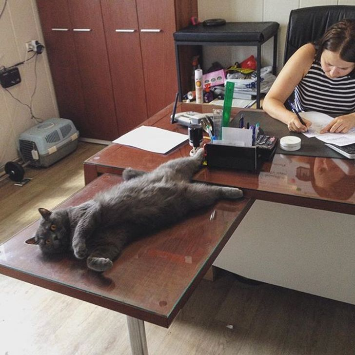 30Photos ofCats and Dogs toMake You Forget About Everything
