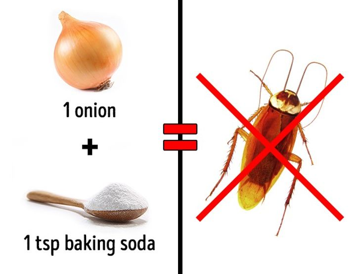 3Safe Ways toGet Rid ofInsects atHome