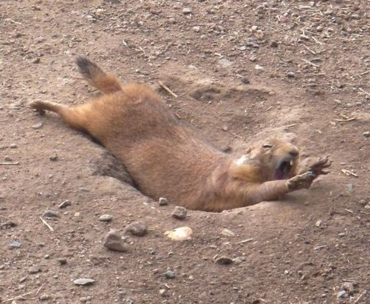 20+Hilarious Photos ofClumsy Animals That Are Hard toStop Laughing At