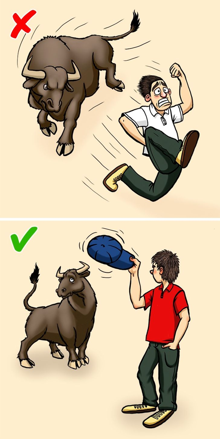 12Techniques That Will Help You Survive aDeadly Battle With anAnimal