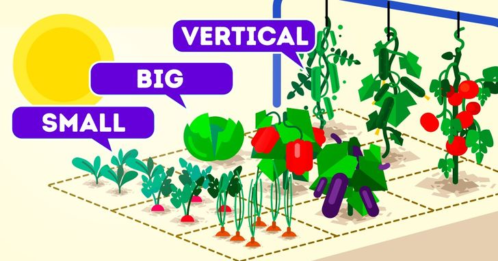 How To Build A Garden In A Square Meter