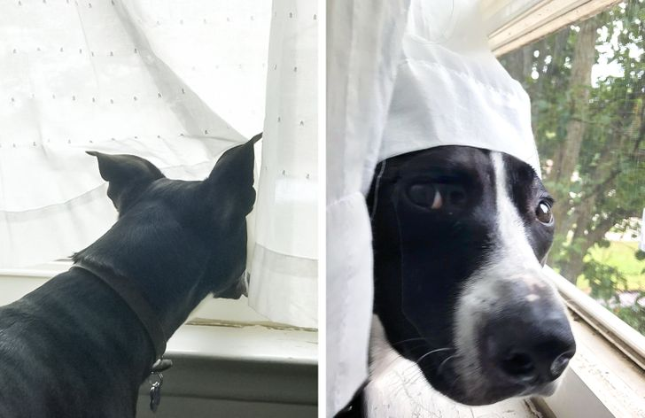 19 Dogs Who Tried Hard to Be Good Boys but Failed
