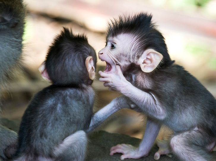 15 Behaviors That Animals and Humans Unknowingly Share