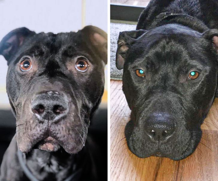 How Love Changed 18 Pets After They Finally Found Their Forever Homes