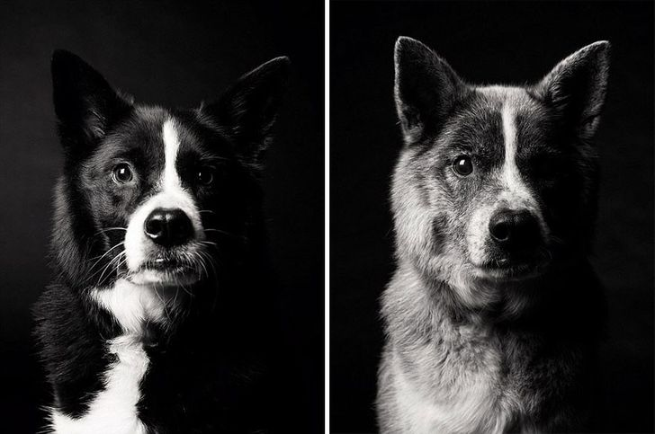Touching Dog Photographer Showing How Dogs Get Older