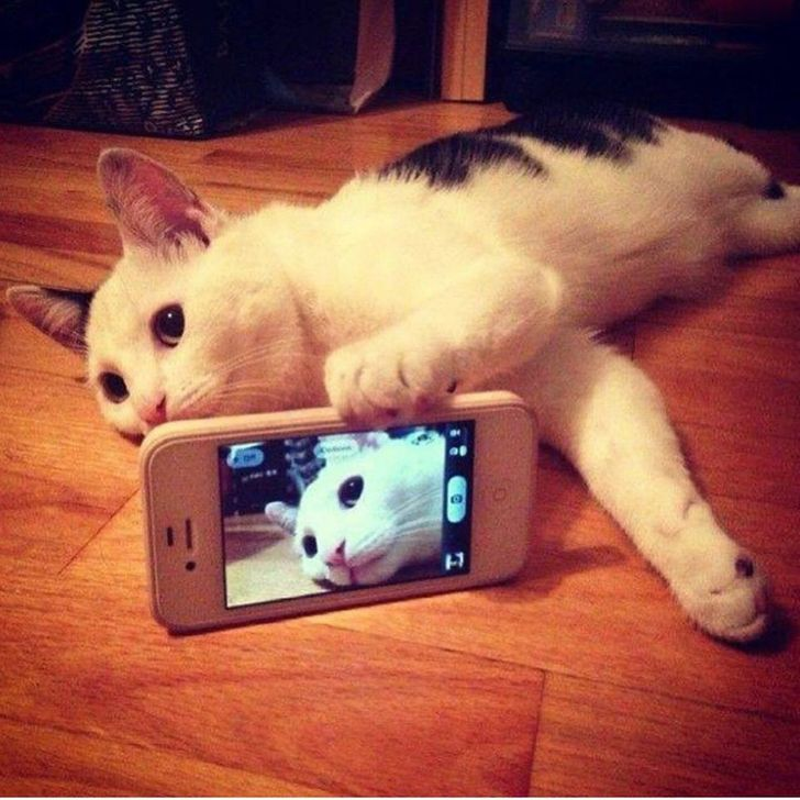 20+Cats That Took the Selfie Game toaWhole New Level