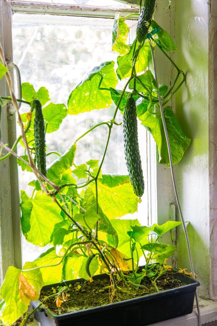 Evinizde Sebze ve Meyve Yetiştirmek İçin Pratik Bilgiler!