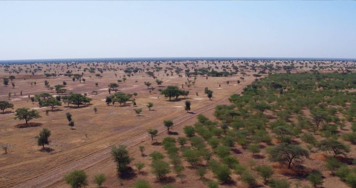 """People in Africa Are Building the """"Great Green Wall"""" Made From Planted Trees to Help the Planet Survive the Worst"""