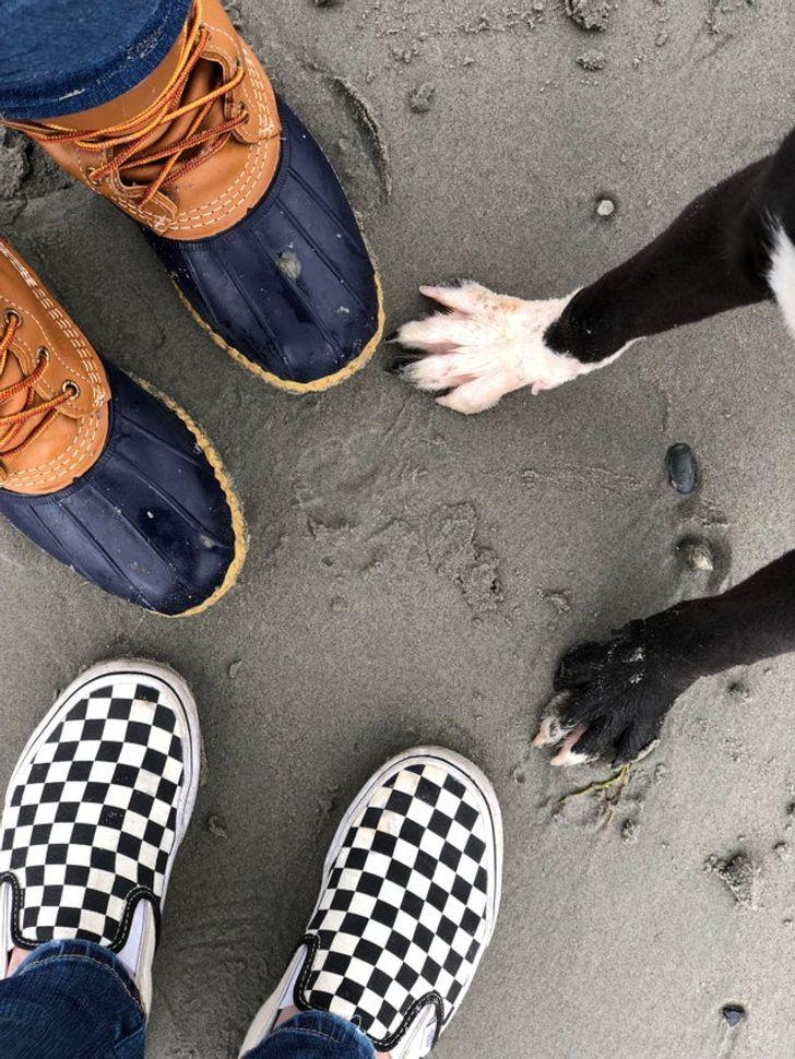 23 Photos Proving Every Family Needs a Pet