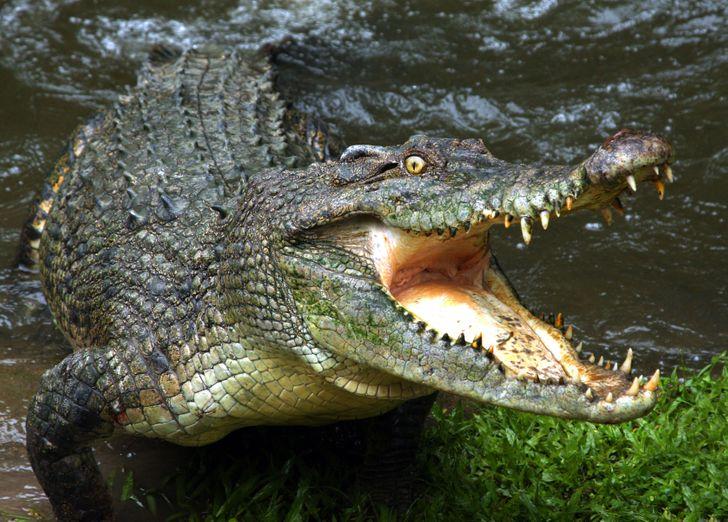 13 zwierząt, które mogą przetrwać najdłużej bez jedzenia