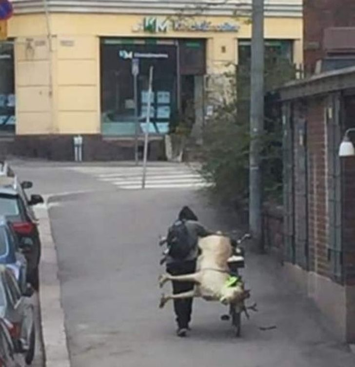 20 Pics Showing What It's Like to Live in Finland, and You May Find Them a Little Strange