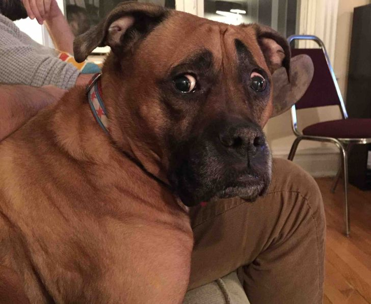 """20 Pets Whose Middle Name Is """"Drama"""""""