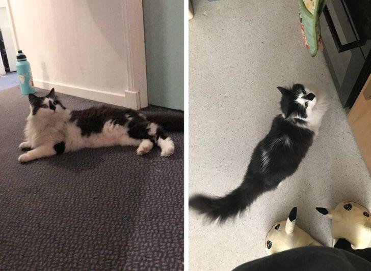 23 bằng chứng cho thấy mèo là cái loài thích ăn Pate của sen nhưng mà lại mê máy lạnh nhà hàng xóm 13