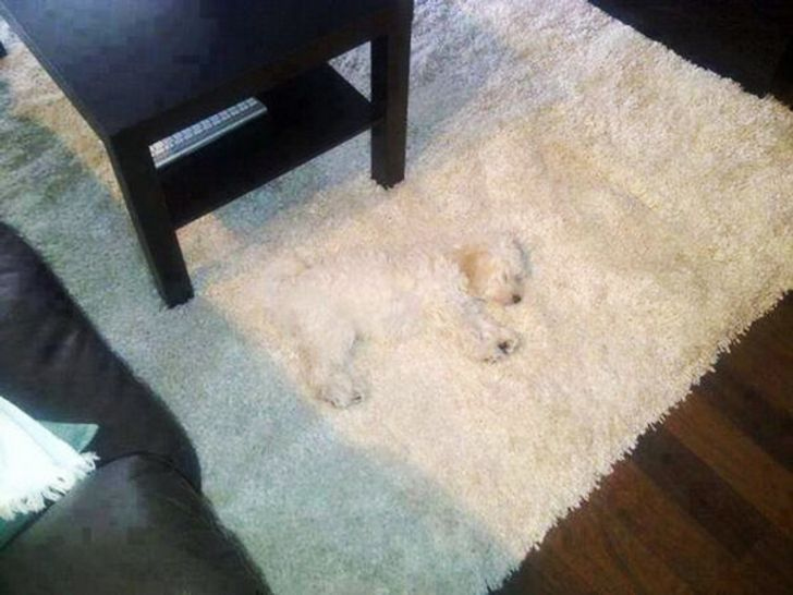 20 Dogs Who Believe They Have Found The Perfect Hiding Spot