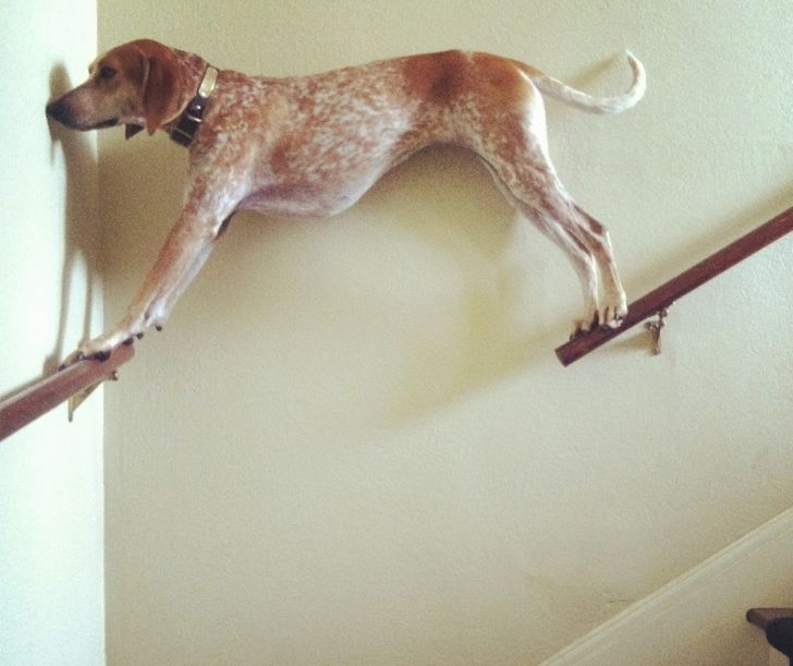 20Animals That Are SoOutrageously Unfortunate WeCouldn't Help Laughing