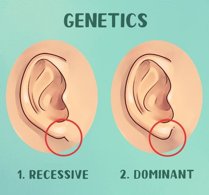 What Your Ears Reveal About You