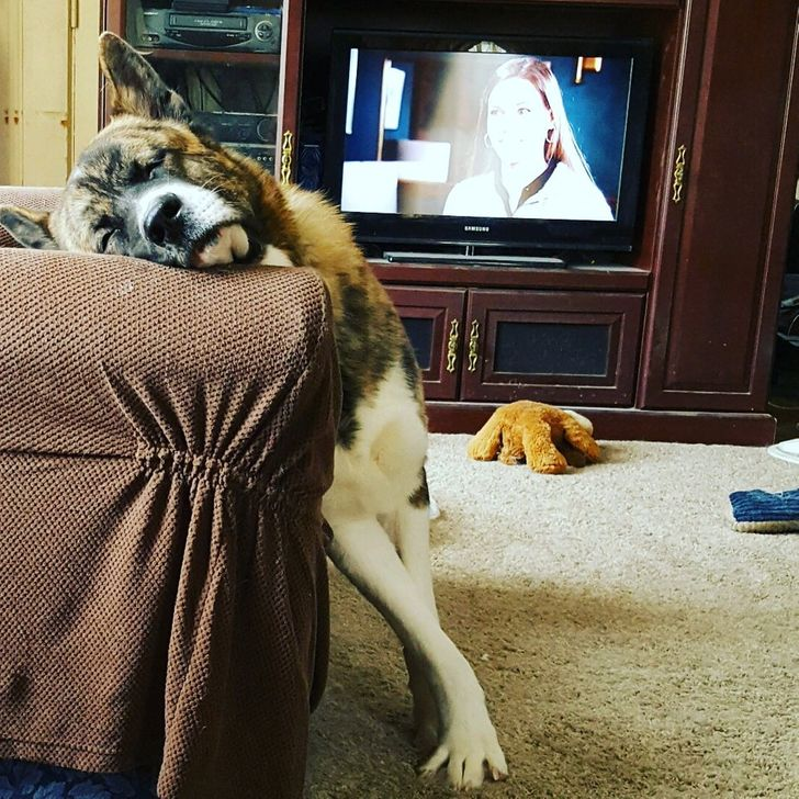 19 Hysterical Times People Shared Wacky Habits of Their Pets