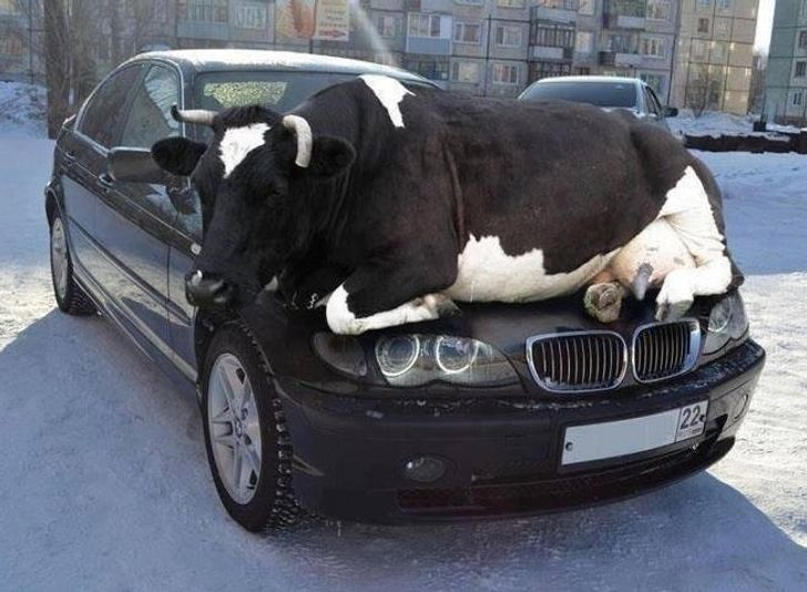 13Hacks toStop Animals From Ruining Your Car