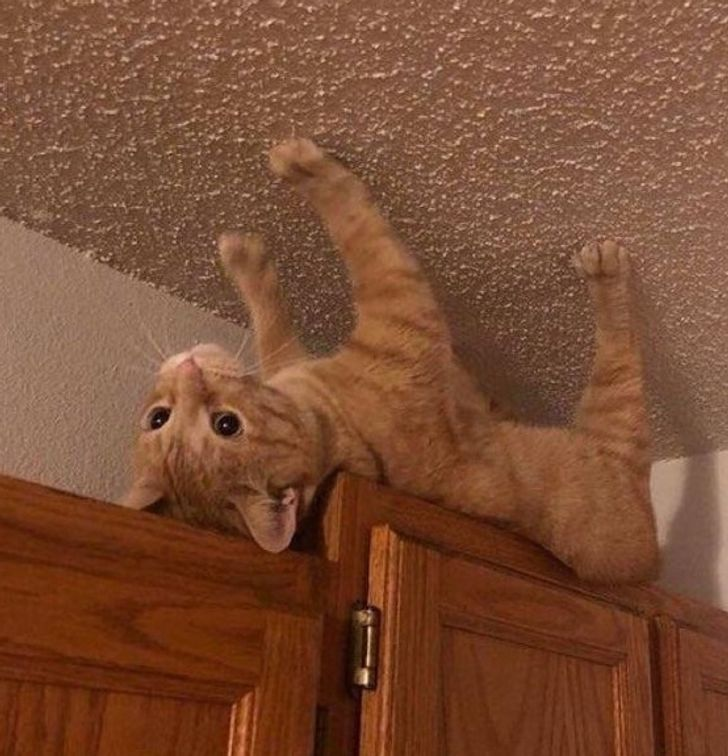 20 Cats Whose Lives Are More Exciting Than a Reality Show