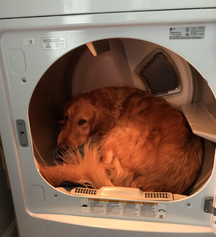 20+ Dogs That Lost Their Default Settings