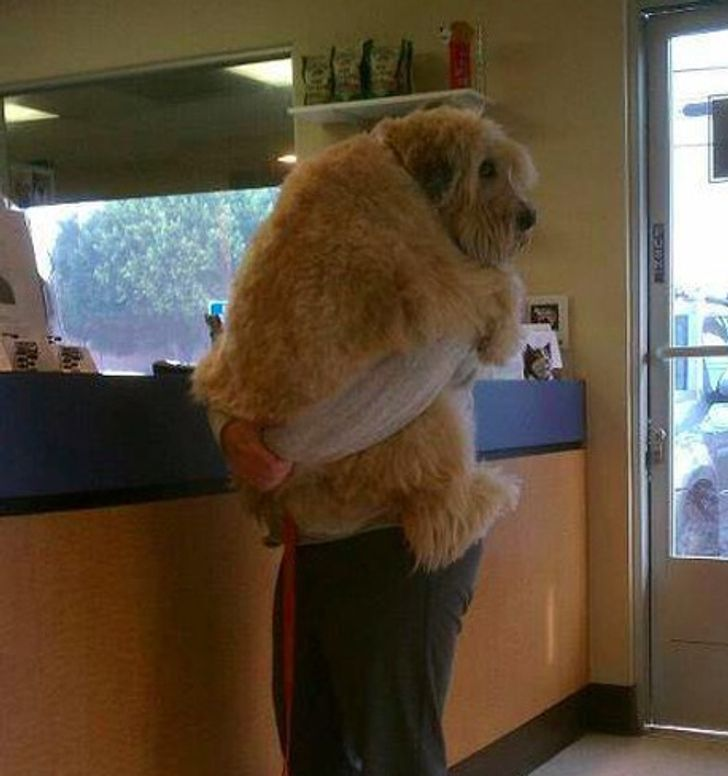28 Dogs Who Don't Realize How Big They Are