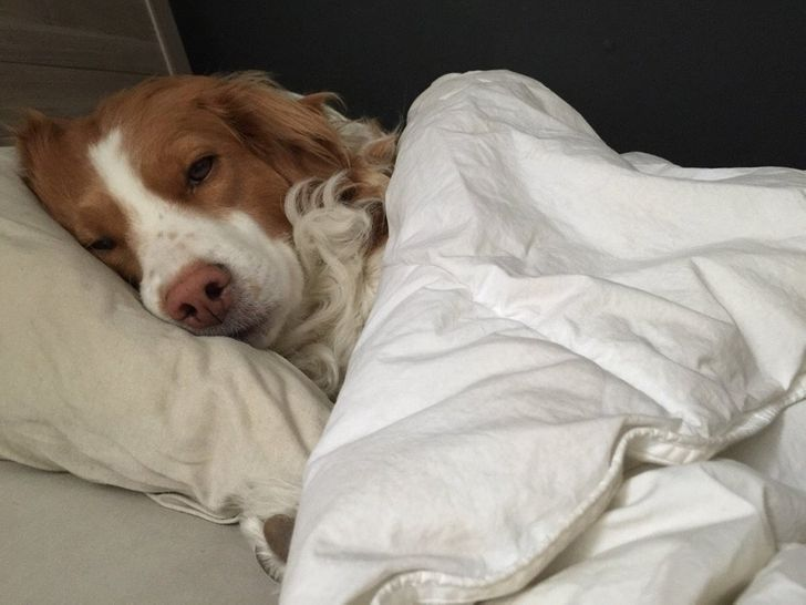 18 Hysterical Sights People Woke Up To Thanks To Their Quirky Pets