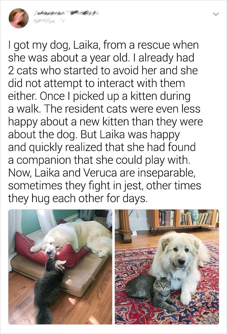 20+ Cats and Dogs Who Forgot About Stereotypes and Became Best Friends