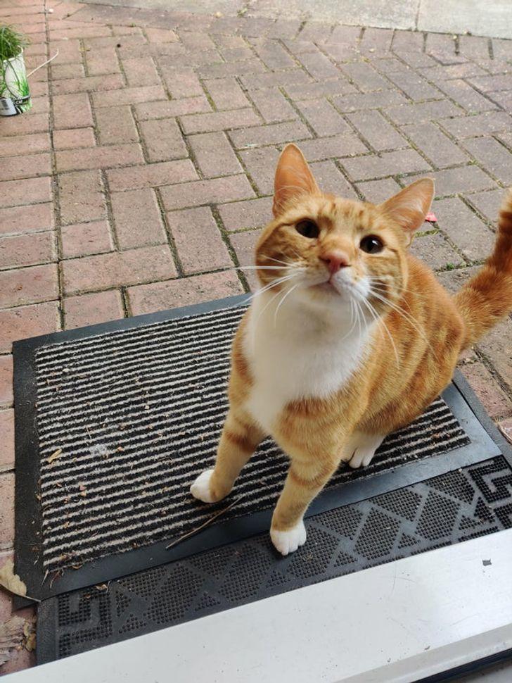 23 bằng chứng cho thấy mèo là cái loài thích ăn Pate của sen nhưng mà lại mê máy lạnh nhà hàng xóm 11