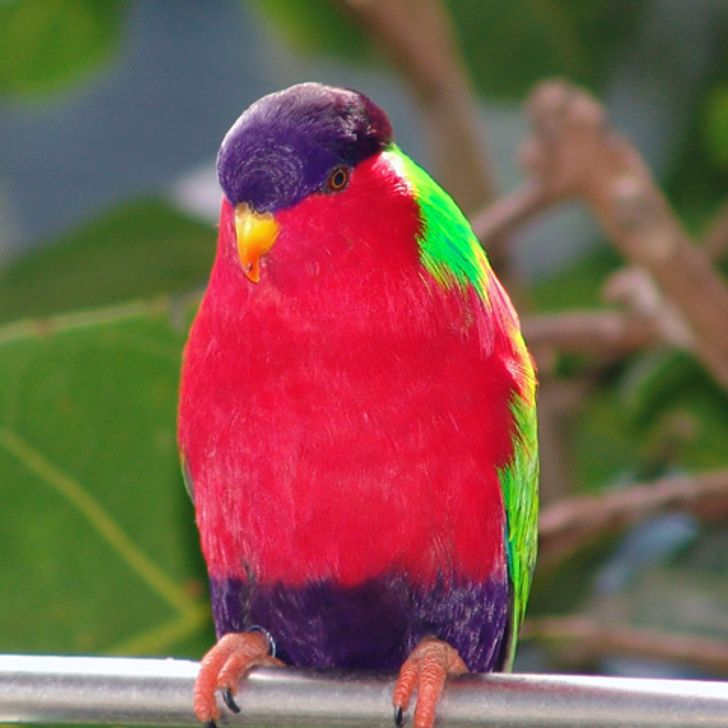 20 Feathery Rainbows, Also Known As Colorful Birds