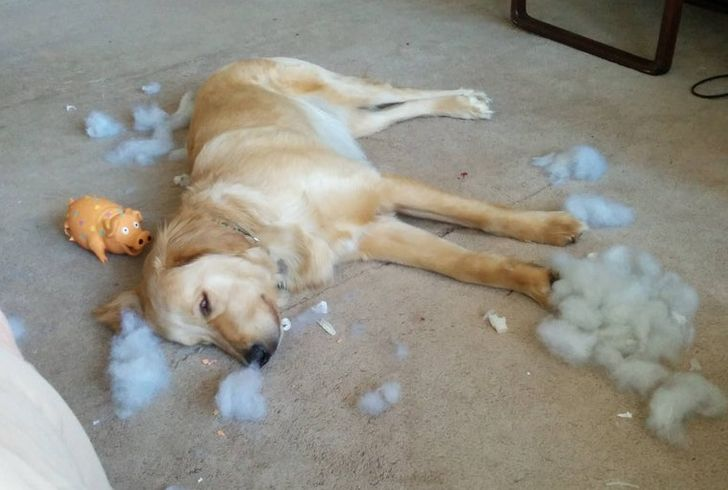 20 Cheeky Pets Who Look So Excited About Their Crimes, It's Hard to Be Angry With Them