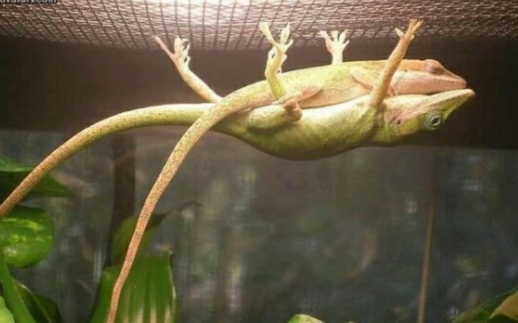17 Photos Proving Animals Can Do the Impossible