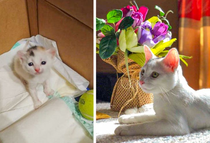 20+ Shelter Animals That Were Saved by Loving People, and Now They're Happy Pets