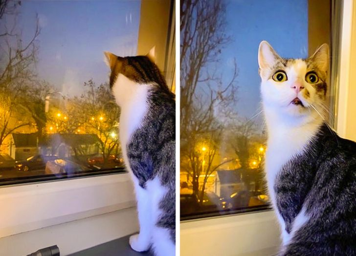 18 Cat Habits That Make People Squeal With Delight