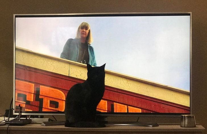 20+ People Who Got a Cat and Now Need at Least a Minute of Peace and Quiet