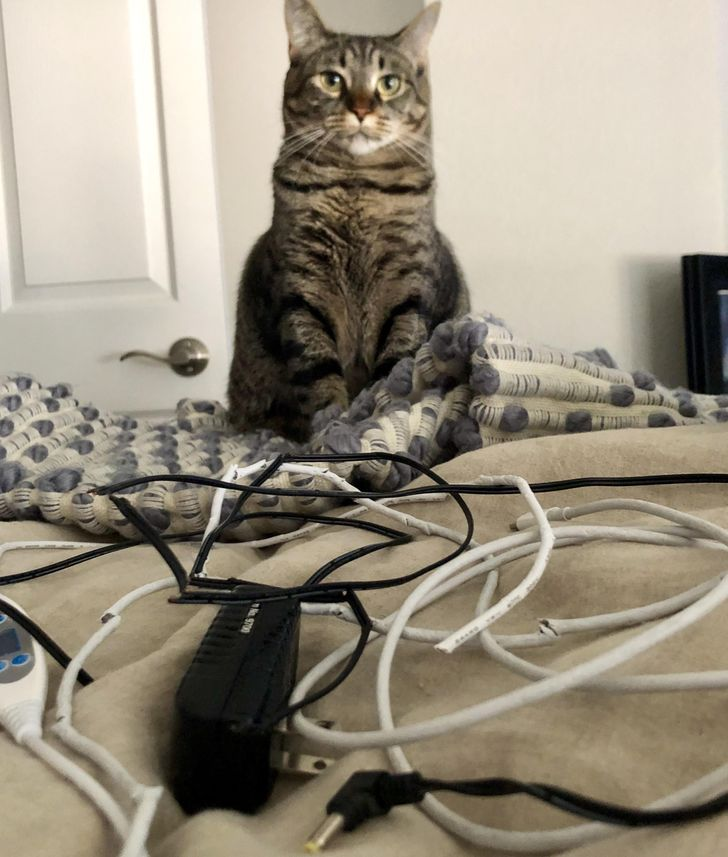 20 Cats That Don't Bother to Ask for Permission
