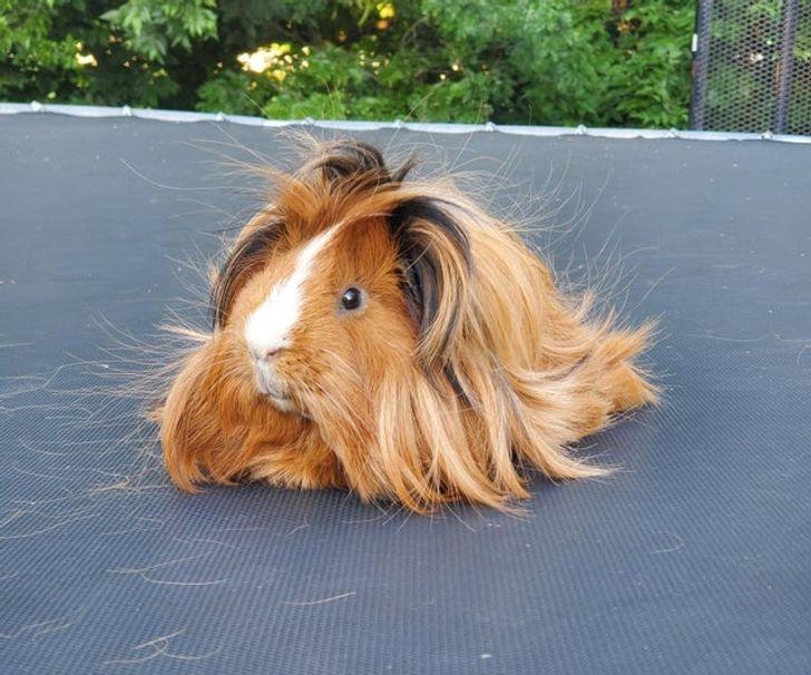 20 con vật cưng có bộ lông mềm mịn tới mức bạn chỉ muốn lấy làm gối ôm và ngủ cho qua mùa dịch 12
