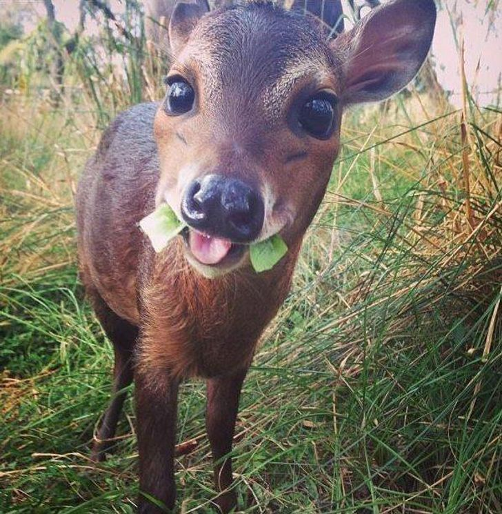 31Cute Baby Animals That Can Melt Even aSnow Queen's Heart