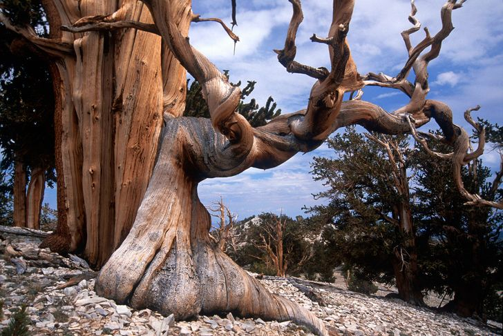 The15 Most Beautiful Trees inthe World