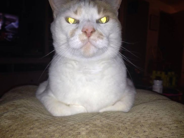 24 Cats You Won't Try to Mess With