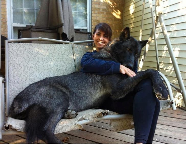 20Astonishing Animals Whose Size IsBeyond Our Understanding