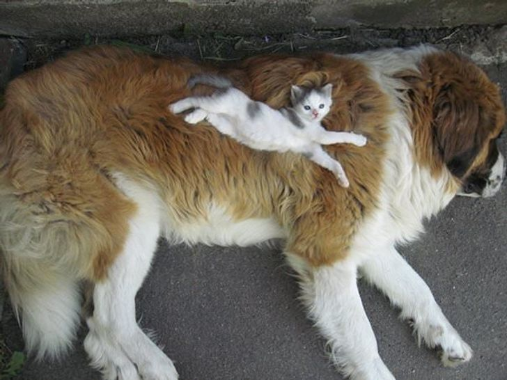 15+ Pics That Prove Dogs and Cats Have Special Relationships