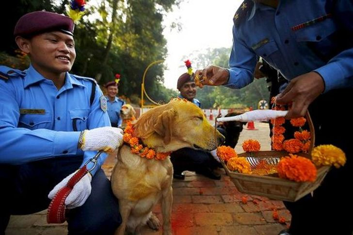 People Worship Dogs for Their Friendship and Loyalty During an Annual Festival in Nepal