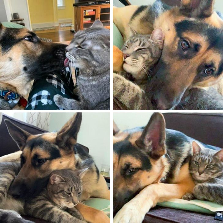 20+ Pics Proving That Love Is a 4-Legged Word