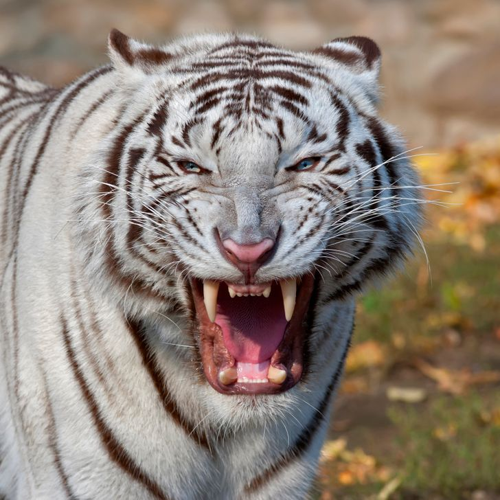 15+ Animals That Have the Strongest Bite