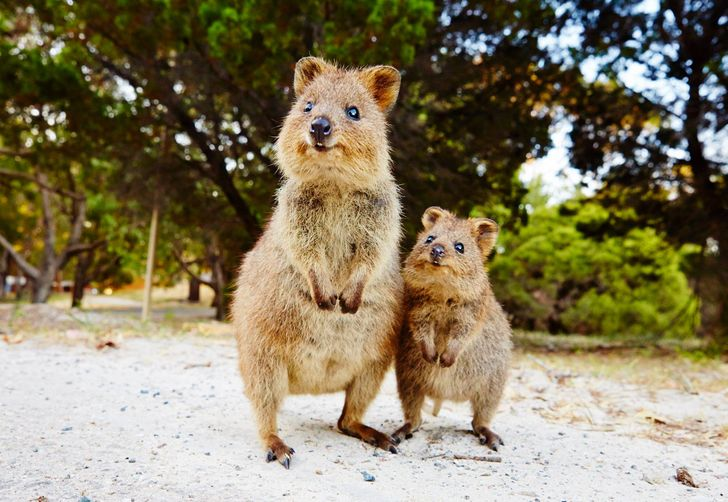 21Convincing Reasons toLove Australia From Afar