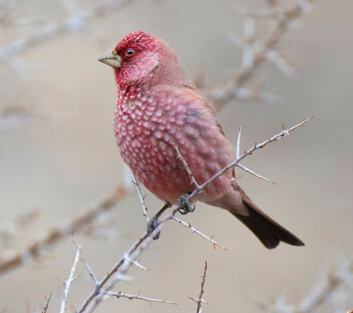 These Birds Look Like Strawberries That Grow Right From Tree Branches