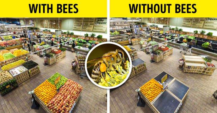 What Would Happen If All the Insects on Earth Disappeared